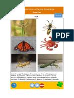 Descobrindo a Fauna Brasileira