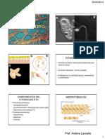 CITOESQUELETO_MEC_DIF MEMBR (modo de impresion).pdf