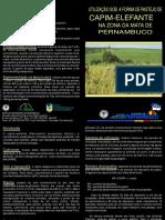 Capim Elefante Pastagem 2009.pdf