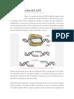 La manipulación del ADN