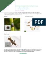 Planeación - Jardin Transicion.pdf