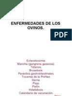 ENFERMEDADES DE LOS OVINOS
