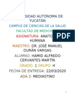 ADA 2. Mediastino.docx
