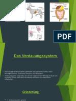 Biologie - Verdauungssystem