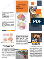 folleto CEREBRO NIÑO.docx