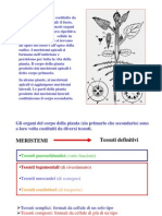 Tessuti meristematici