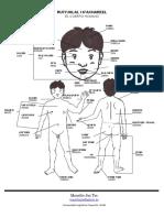 El Cuerpo Humano Poqomchi'