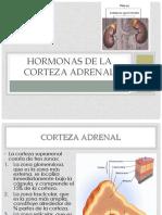 8. GLANDULAS SUPRARRENALES.pdf