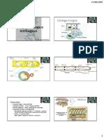 5- Citologia, Fisiologia e Antifúngicos