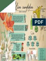 infografía bionica.pdf