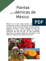Plantas de Mexico