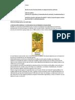 La revolución agrícola y su influencia en las primeras civilizaciones.docx