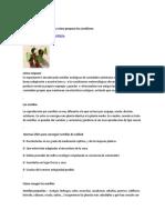 Germinación de Hortalizas y Cómo Preparar Los Semilleros