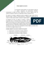 Sistema digestivo en insectos.docx
