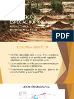 XEROFÍTICO Y ESPECIAL RUPÍCOLA.pptx