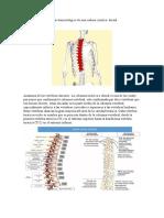 Análisis kinesiológico de una cadena cinética
