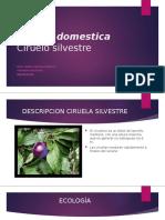 Prunus domestica.pptx