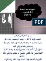 anatomi_panggul