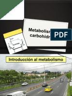 Metabolismo carbohidratos.pdf