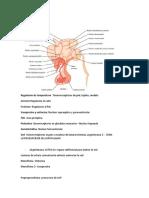 Fisiología Endocrino