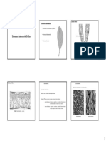 aula_10_anatomia_folha.pdf