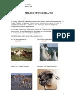 CLASES CASTRACION Camelidos-sudamericanos