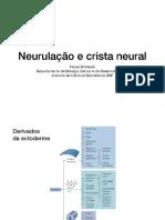 Neurulação BioDevo 2019_compressed