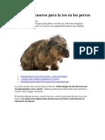 7 remedios caseros para la tos en los perros