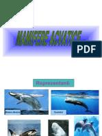 0_mamifere_acvatice.ppt