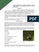 Proyecto mariposas (Investigacion I)
