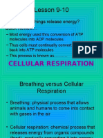 EC Lesson Cellular Respiration