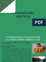 Clase6 Enfermedades Abioticas.ppt
