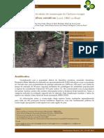 cachorro-vinagre_speothos_venaticus.pdf