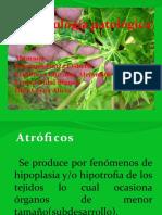 fitopatologia.pptx