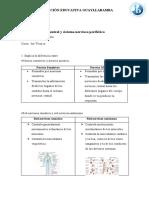 Sistema nervioso central y sistema nervioso periférico.docx