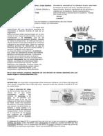 2 Biología Guía de Mitosis y Meiosis