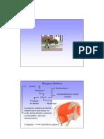 Miopatia fibrótica1