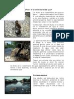 Cuáles son algunos efectos de la contaminación del agua