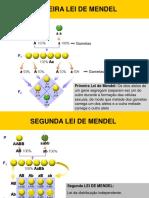 Aula 13_Ligação e Permuta Genética