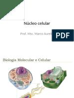 Aula 7 - Núcleo celular