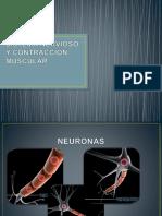 Clase Sistema Nervioso y contraccion muscular