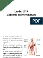 011 El sistema excretor humano
