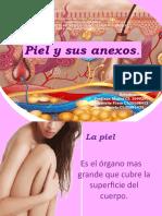 diapositivas intro piel y anexos