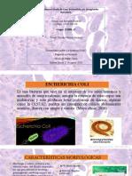Paso 3  Elaborar Estudio de Caso  Escherichia coli  Strongyloides stercolaris