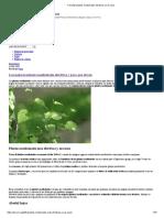+ de 230 plantas medicinales efectivas y sus usos
