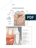 penyakit gigi dan mlt 2