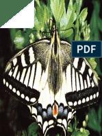Animale si plante - 0109-0114 - Fluturi si molii