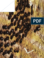 Animale si plante - 0115-0118 - Insecte colonizatoare