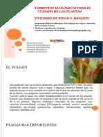 Lunes 3hora Teoria tratamiento de plagas lunes 3ªhora.pdf