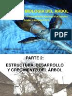 ESTRUCTURA Y DESARROLLO DEL ARBOL